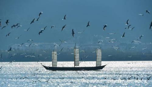 2017滇池捕撈季結束 捕撈量同比減少