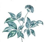 手繪藥用植物係列文創産品