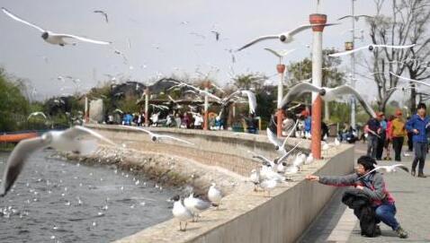 2017年云南预计接待海内外游客5.67亿人次