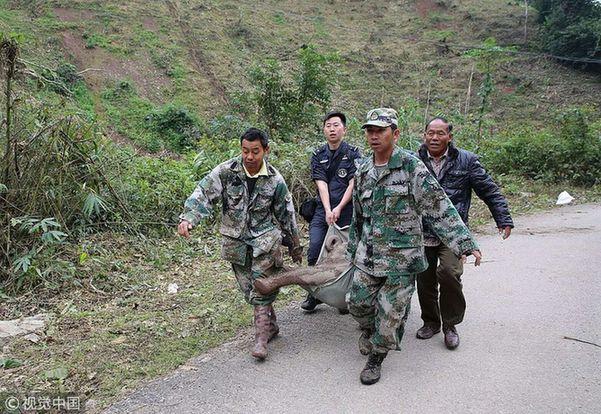 云南野生幼象摔下山 救援人员紧急施救