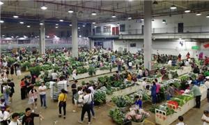 消費升級帶動家庭園藝需求 中西部城市花卉需求量爆發式增長