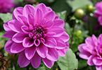秋季來昆明尋花