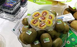 農博會展出的各色水果