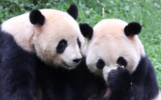 雲南野生動物園過節也歡樂