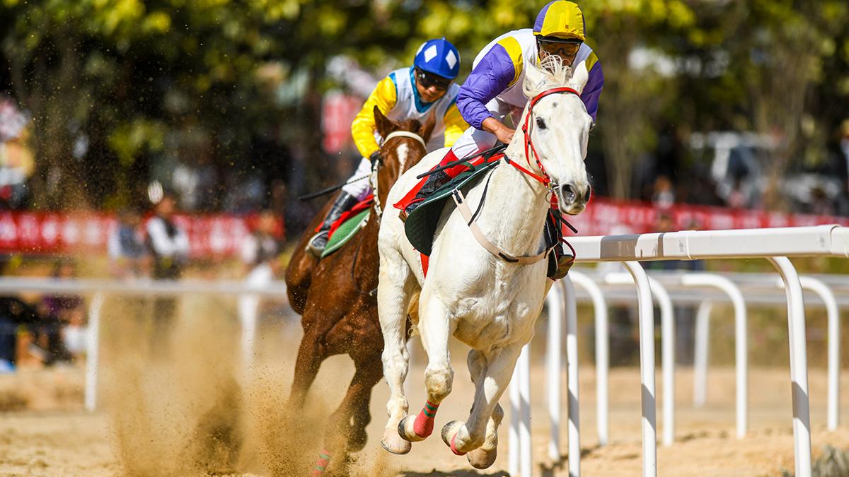 【高清圖集】馬背上的角逐 迪慶代表隊成最大贏家