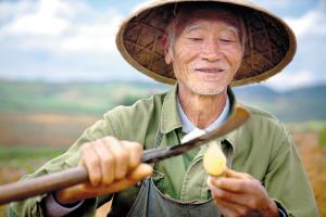 """今年""""多多農園""""將在雲南推進5個示范項目"""