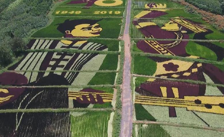 雲南宜良:稻田裏的美麗圖案
