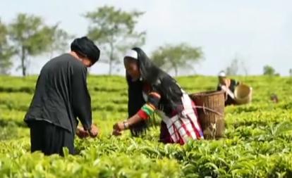 雲南:6年實現707萬農村貧困人口脫貧