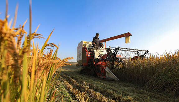 攜手助力大米農戶 共推高原特色農業發展