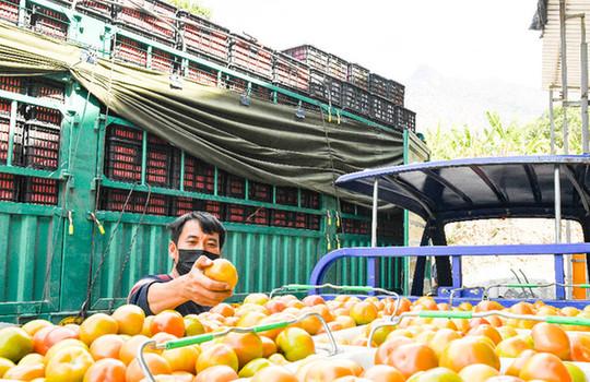 雲南怒江160余噸農産品馳援湖北鹹寧
