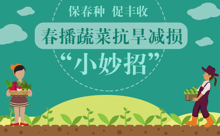"""【保春種 促豐收】春播蔬菜抗旱減損""""小妙招"""""""