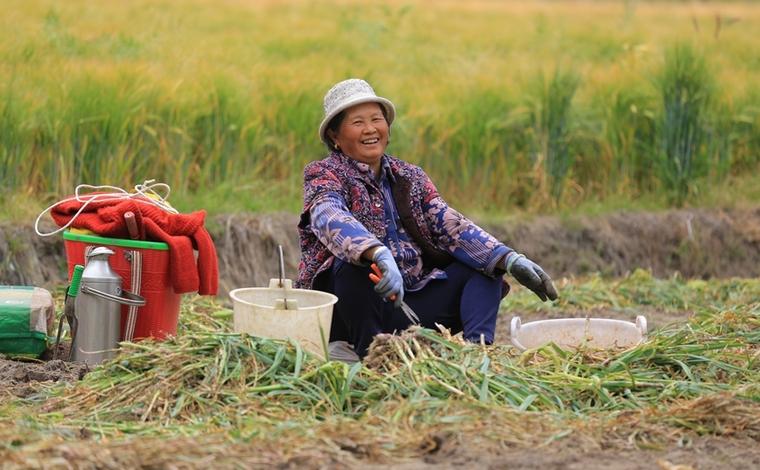 (雲南脫貧百日總攻)黎明鄉:人勤農事忙 致富有奔頭