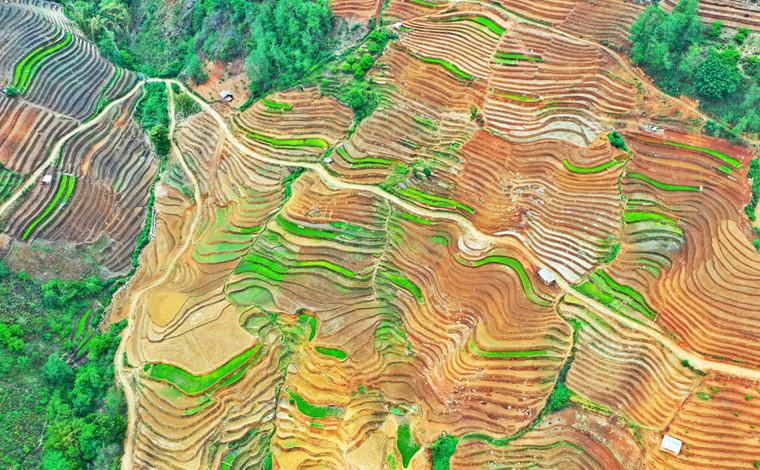 雲南西盟:夏之初的農耕之美,田園之美