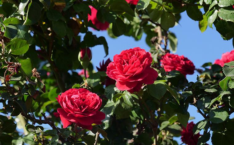 高清組圖|鏡頭記錄陽宗海畔的花間故事