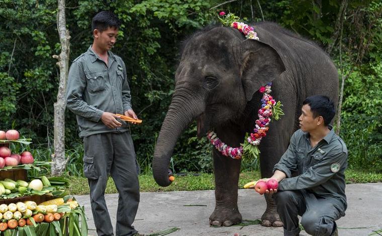 """雲南西雙版納:大象""""羊妞""""五歲啦!"""