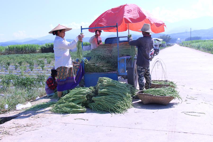 邊陲孟定:每年三季蔬菜種植帶動農民增收