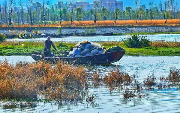 昆明陽宗海開湖捕撈銀魚 捕撈期為40天