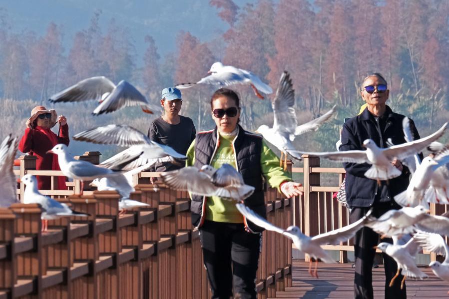 雲南石屏異龍湖:水清景美人鳥共歡
