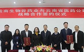昆明高新企業雲南生物谷藥業與雲南省醫藥公司簽署戰略合作協議