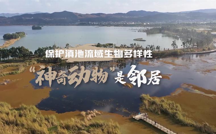 """【保護滇池流域生物多樣性】""""神奇動物""""是鄰居"""