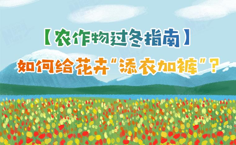 """【農作物過冬指南】如何給花卉""""添衣加褲""""?"""