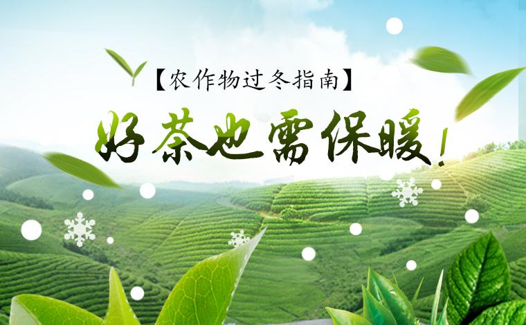 【農作物過冬指南】好茶也需保暖!