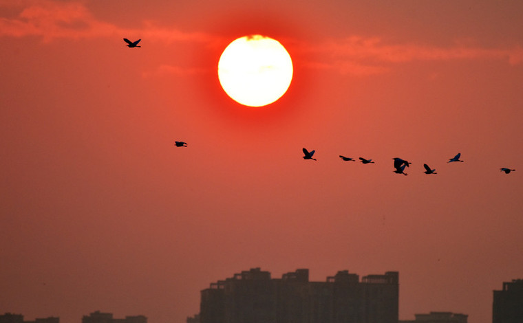 雲南彌勒:白鷺翩躚紅日升