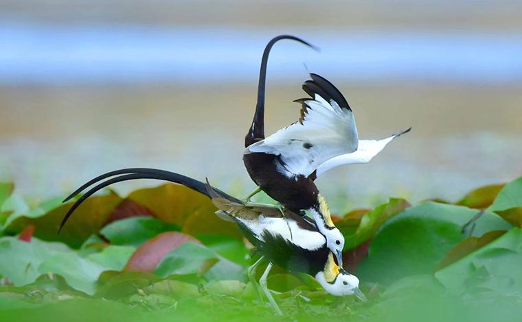 圖覽保山生物多樣性之美