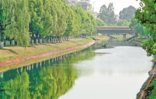 河道生態改善滇池劍魚洄遊産卵